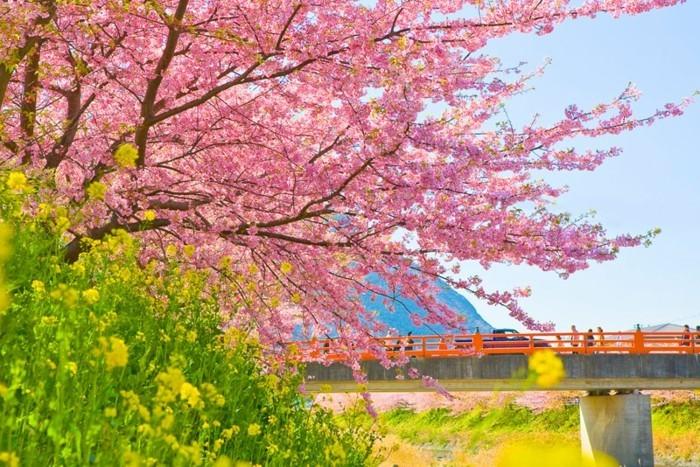 Beste-Reisezeit-Japan-über-die-Brücke