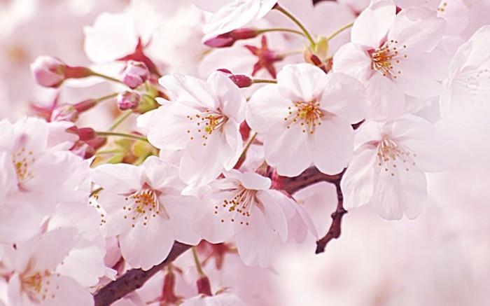 Beste-Reisezeit-Japan-es-lohnt-sich