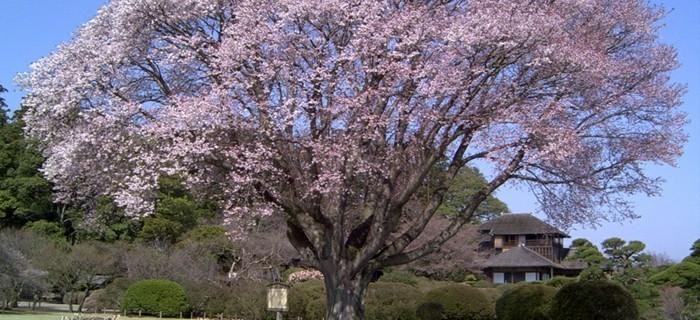 Beste-Reisezeit-Japan-und-die-traditionelle-Häuser