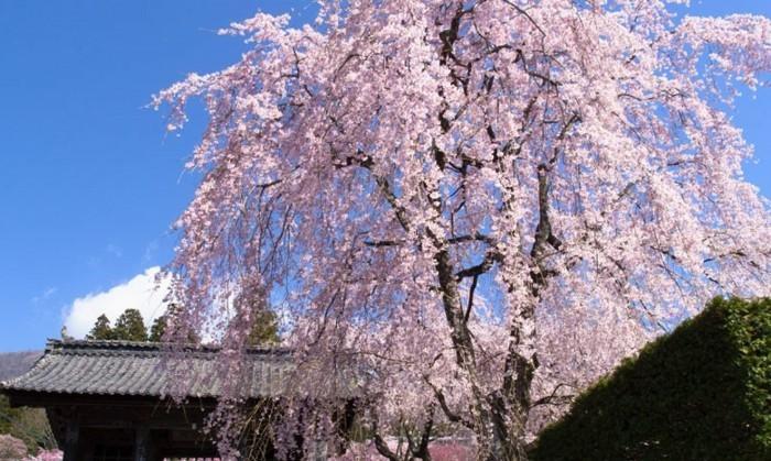 Beste-Reisezeit-Japan-vergeht-Schnell