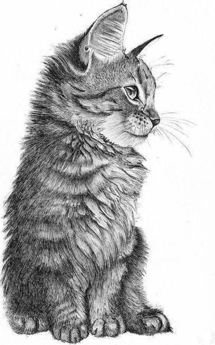 Bleistiftzeichnungen-eine-süße-kleine-Katze