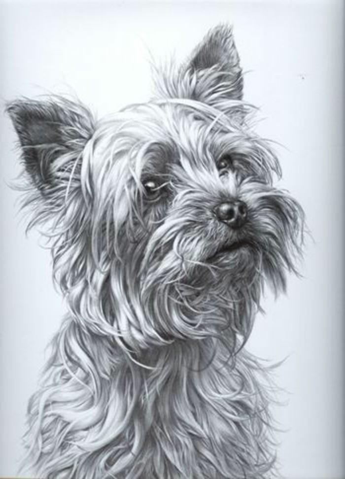 Bleistiftzeichnungen-mit-einem-süßen-Hund