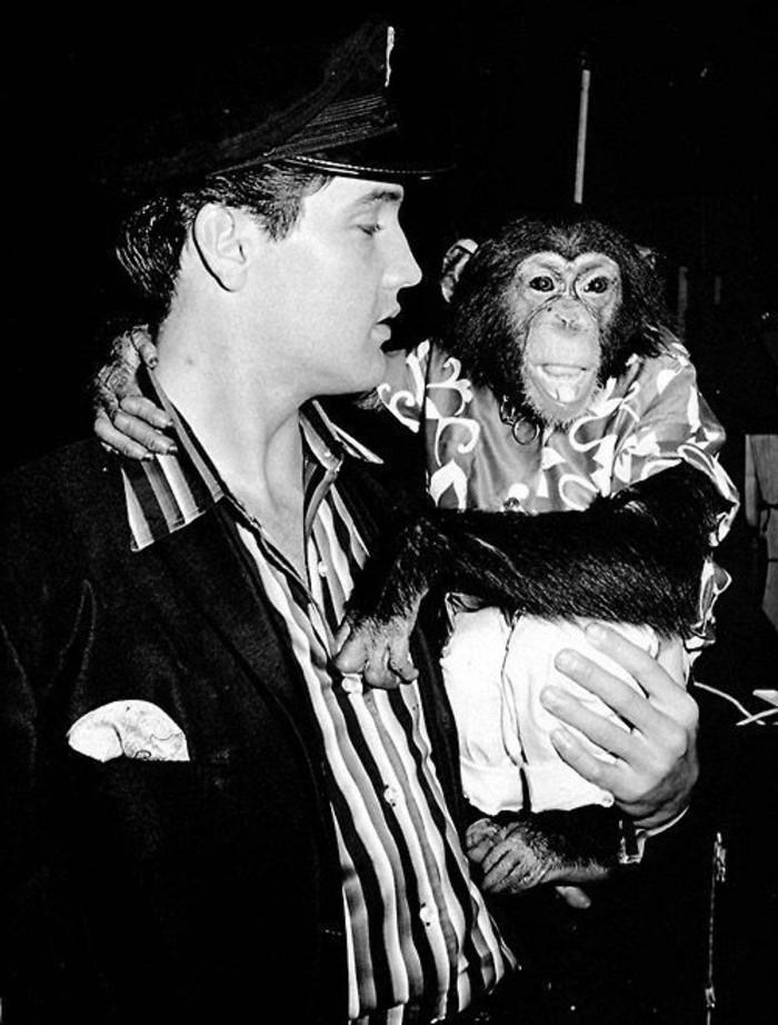 Elvis-Presley-exotische-Haustiere-Affe1
