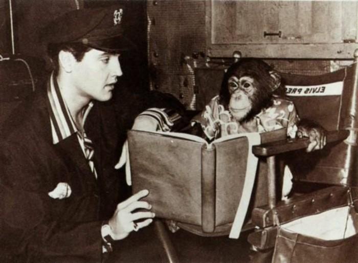 Elvis-Presley-exotische-Haustiere-Affe2