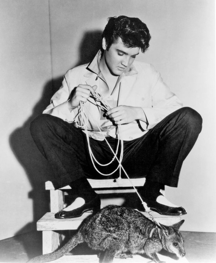 Elvis-Presley-exotische-Haustiere-Känguruh1