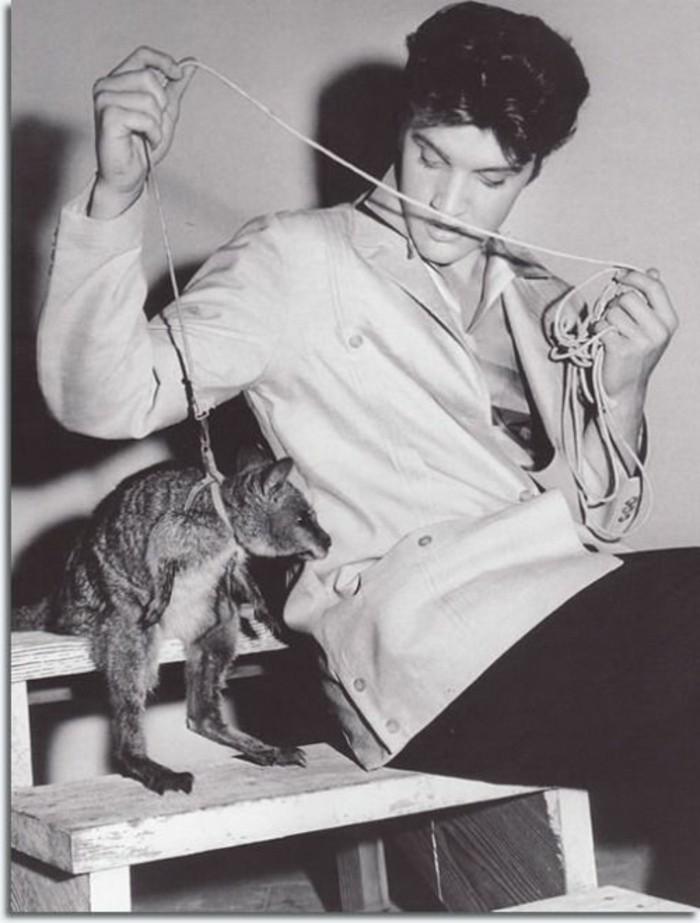 Elvis-Presley-exotische-Haustiere-Känguruh2