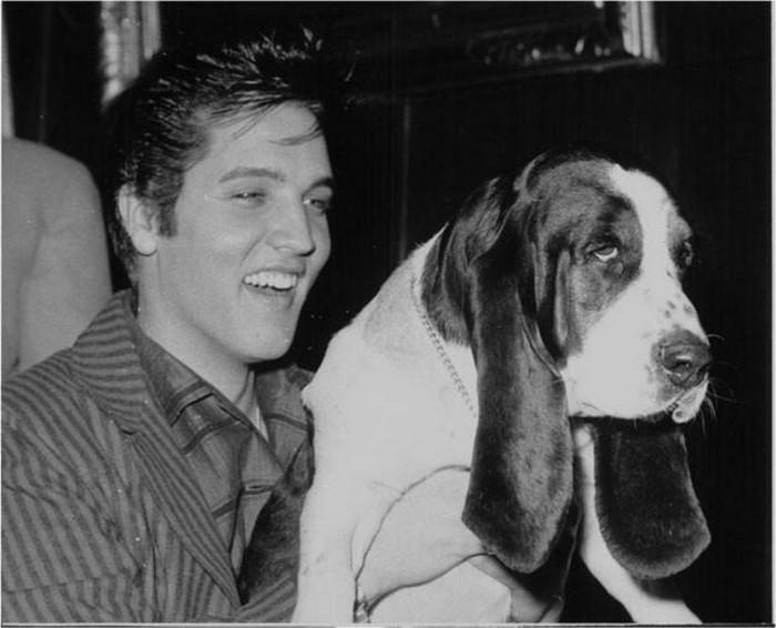 Elvis-Presley-mit-seinem-Basset-1957-exotische-2Haustiere