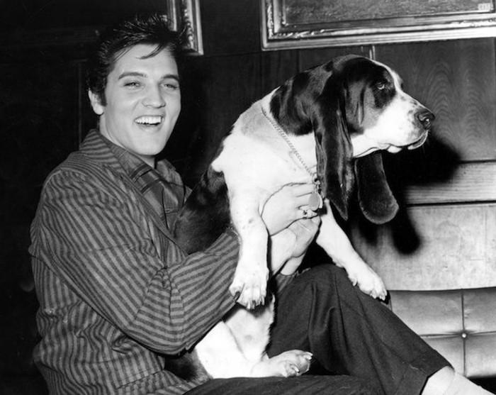 Elvis-Presley-mit-seinem-Basset-1957-exotische-Haustiere