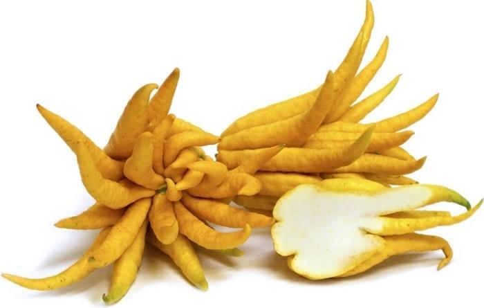 Exotische-Früchte-die-Hand-von-Buddha