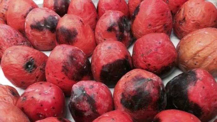 Exotische-Früchte-rote-reife-Kakis