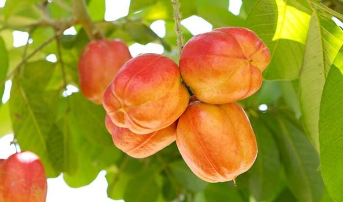 Exotische-Früchte-wie-Pfirsich-aussehen