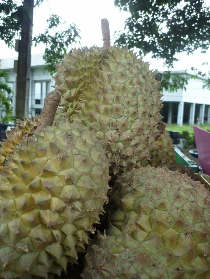 Exotisches-Obst-so-groß-und-mit-Dornen