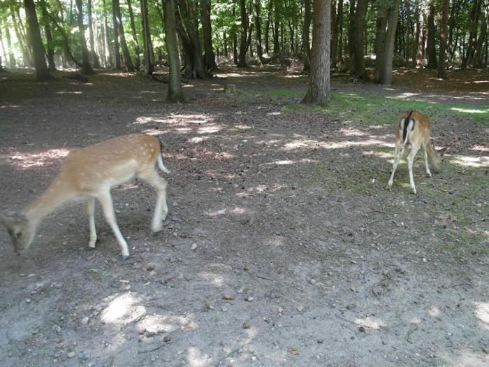 Hamburg-Tierpark-die-Tiere-weiden