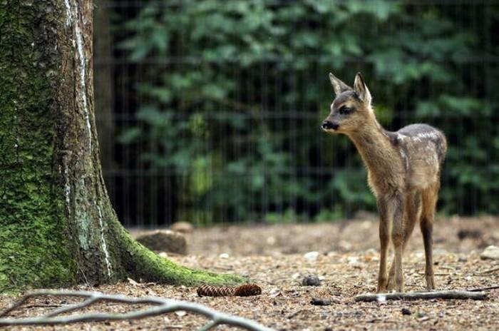 Hamburg-Tierpark-ein-sehr-süßes-kleines-Tier