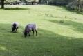 Wildpark Schwarze Berge – die Natur nah erleben
