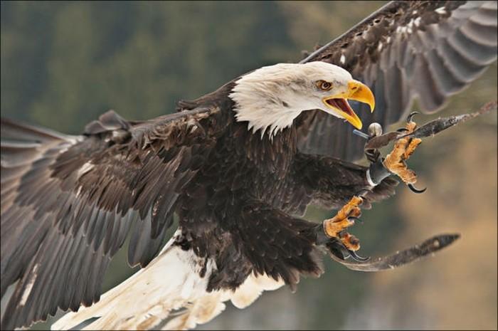 Hamburg-Tierpark-einen-schönen-Adler