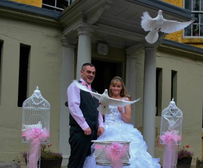 Hochzeit-Tauben-mit-rosa-Bänden
