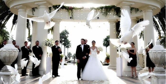 Hochzeitstauben-zu-einer-eleganten-Hochzeit