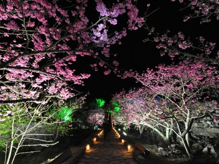 Kirschblütenfest-Japan-Lampen-in-verschiedenen-Farben
