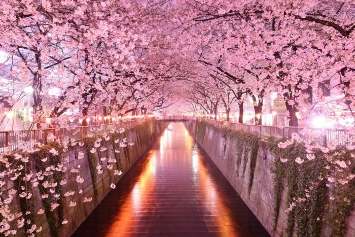 Kirschblütenfest-Japan-so-attraktiv-beleuchtet