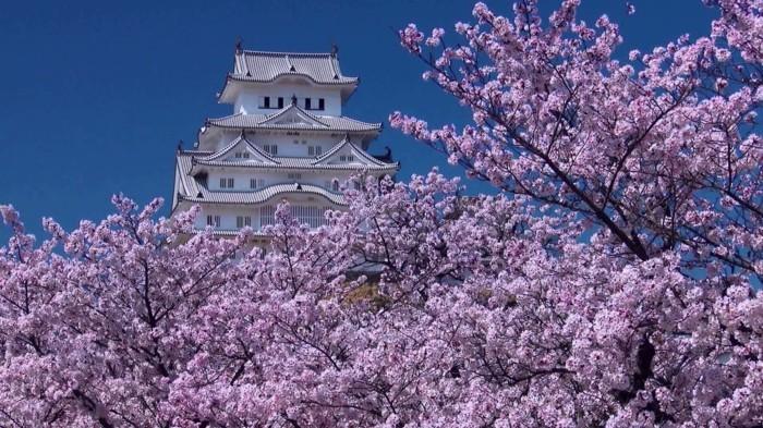 Kirschblütenfest-Japan-vor-einem-Tempel