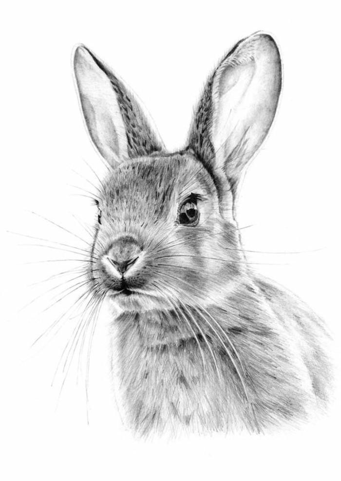 Zeichnen lernen mit bleistift selbst kunst schaffen - Hase zeichnen ...