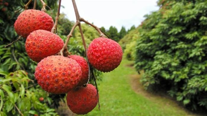 Seltenes-Obst-gleich-zu-genießen