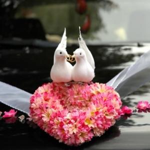 Tauben zur Hochzeit sind bestimmt ein Glücksbringer