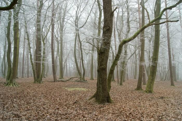 Tierpark-Schwarze-Berge-den-Wald-bei-Nebel