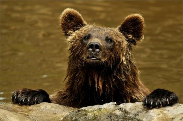 Tierpark-Schwarze-Berge-ein-nasser-Bär