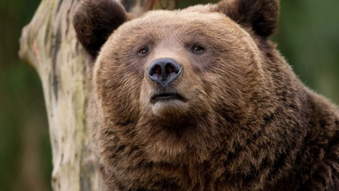Wildpark-Schwarze-Berge-ein-Bär