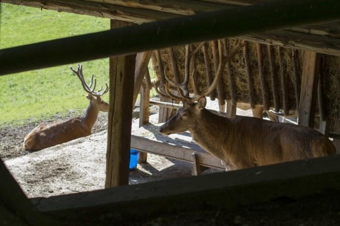 Wildparks-Hirschen-in-der-Hütte