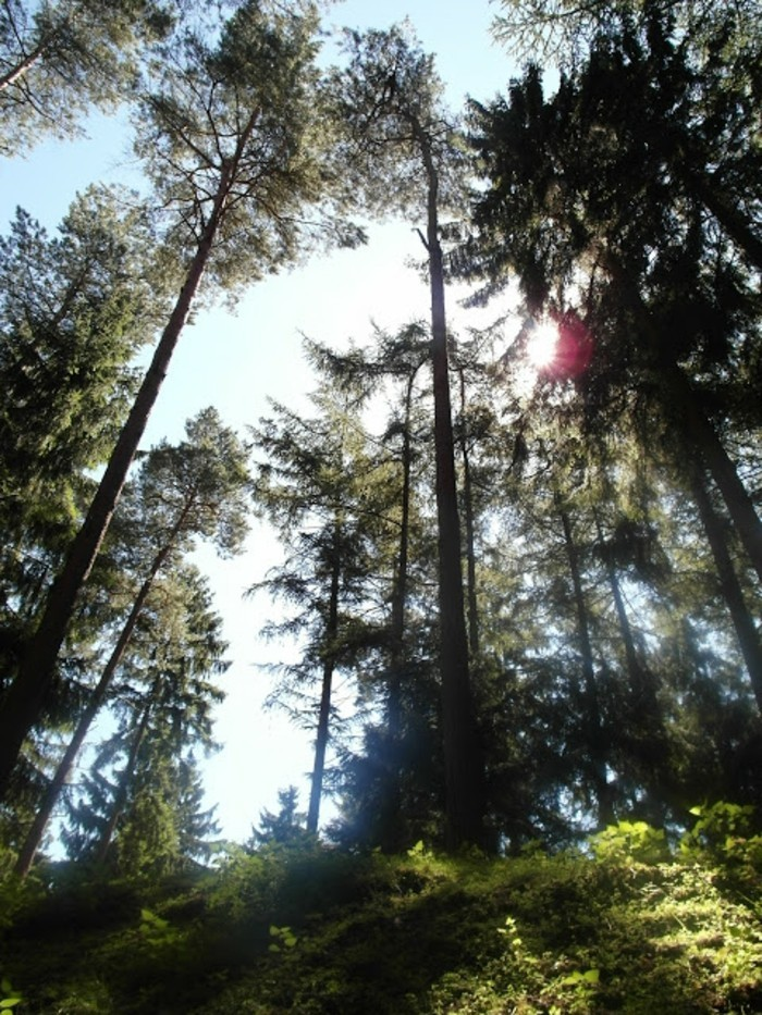 Wildparks-die-Bäumen-sind-bildschön