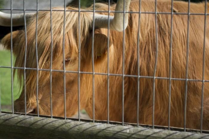 Wildparks-ein-Tier-hinter-den-Zaun