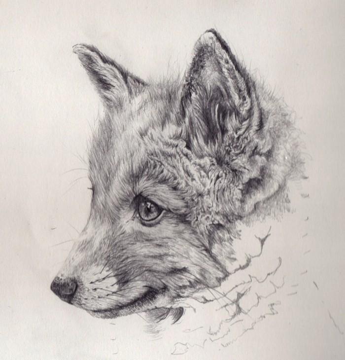 Zeichnen-lernen-mit-Bleistift-ein-süßes-Tier