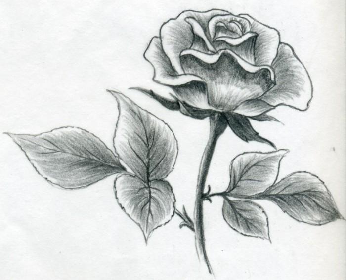 Zeichnen-lernen-mit-Bleistift-eine-Rose