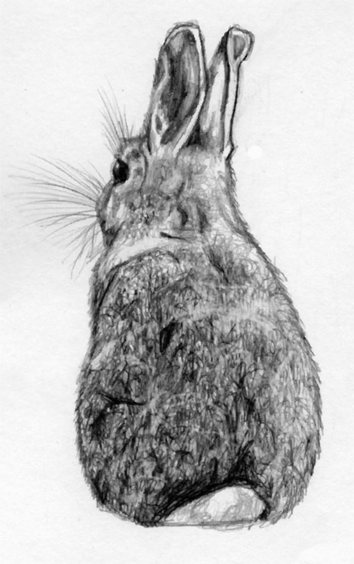 Zeichnungen-mit-Bleistift-mit-einem-Hasen