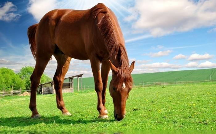 cheval wallpaper hd 1 - photo #40