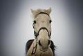 Mehr als 70 super schöne Pferde Bilder!