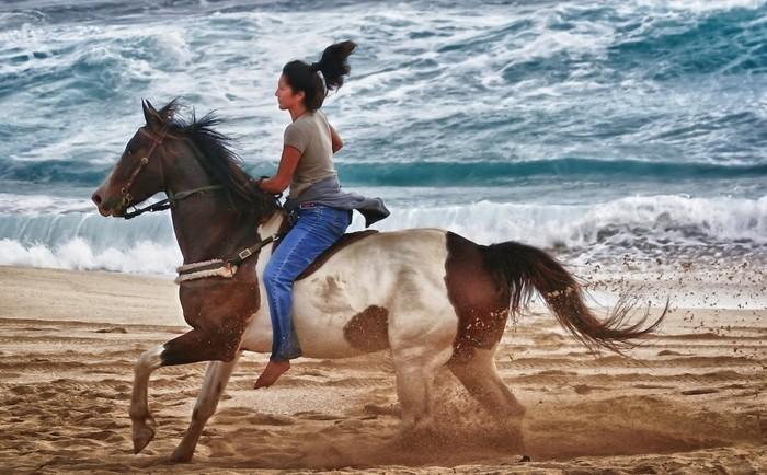 Pferde Fotze