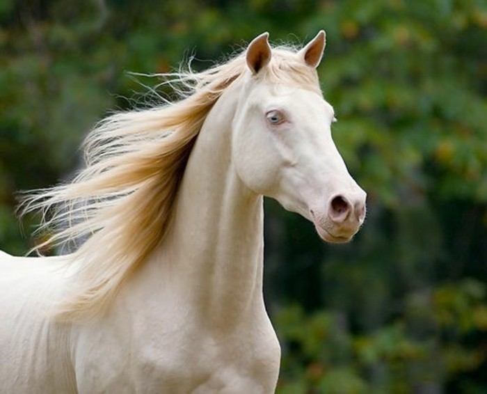 spiel mit pferden
