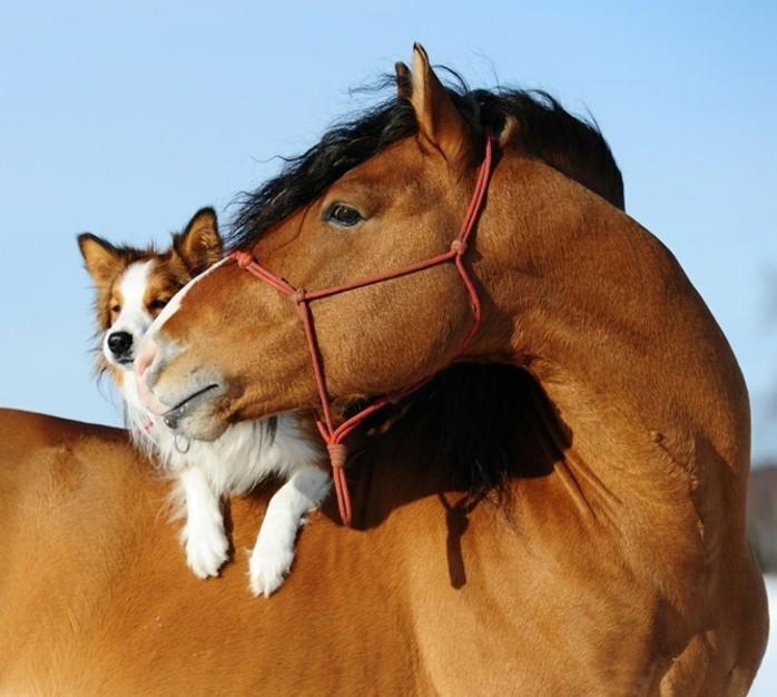 Partnersuche mit hund und pferd
