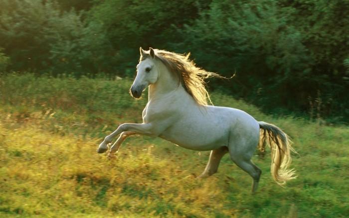 Sch Ne Zeichnungen mehr als 70 schöne pferde bilder