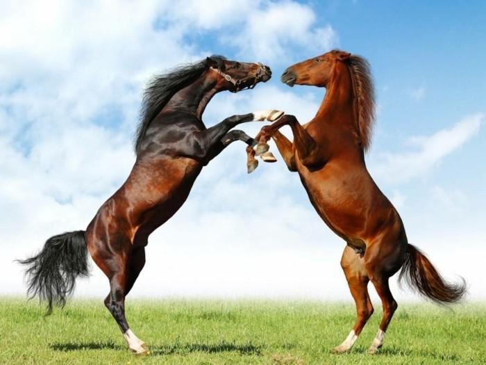 Фото конь на дыбах 4