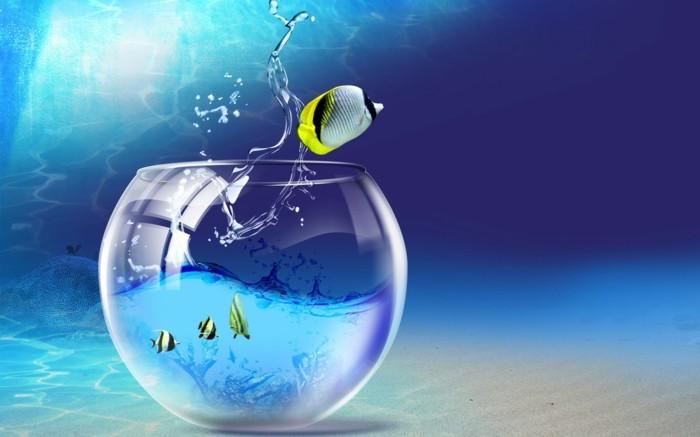 aquarium-schenken-aquaristik-ist-ein-sehr-interessantes-hobby