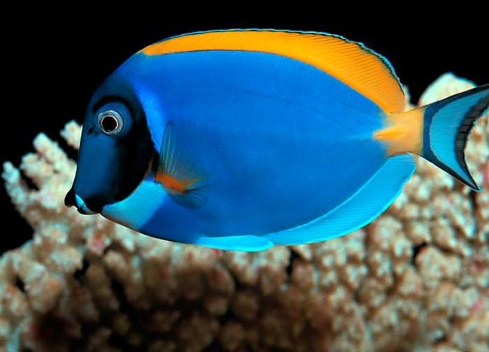 aquarium-schenken-aquarium-fisch