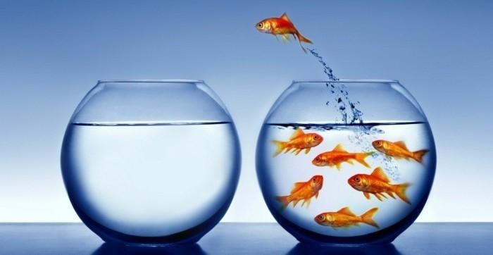 aquarium-schenken-das-aquarium-ist-eine-gute-geschenkidee