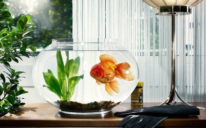 aquarium-schenken-das-aquarium-kann-eine-gute-geschenkidee-sein