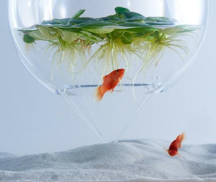 aquarium-schenken-das-konzept-von-haruka-misawa
