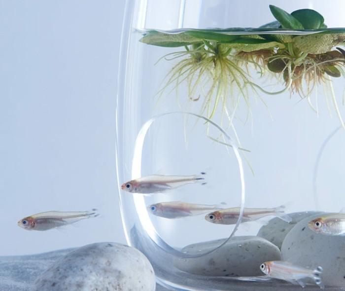 aquarium-schenken-das-projekt-von-haruka-misawa